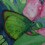 Butterfly 87